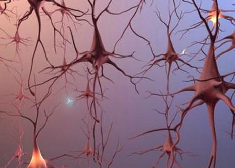 研究发现脐带血细胞可转化为神经元样细胞